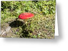 Red And White Potted Toadstool Greeting Card