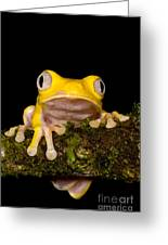 Red-eyed Treefrog, Xanthic Form Greeting Card