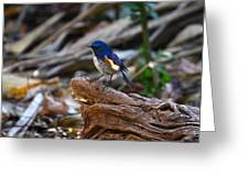 Red-flanked Bluetail 2 Greeting Card