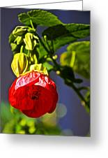 Scarlet Mallow At Pilgrim Place In Claremont-california- Greeting Card