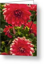 Red Flower Close Up Greeting Card