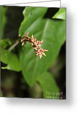 Red Flower In Kauai Forest Greeting Card