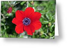 Red Anemone Coronaria 1 Greeting Card
