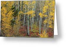 Red Forest Floor Greeting Card