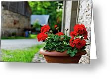 Red Garden Geranium Flowers In Pot , Close Up Shot / Geranium Fl Greeting Card