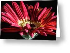 Red Gerbera 1 Greeting Card