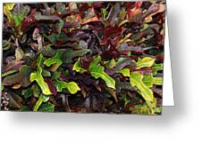Red Green  Leaves Greeting Card