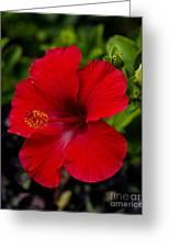 Red Hibiscus - Kauai Greeting Card