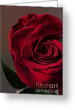 Red Rose Macro 6 Greeting Card