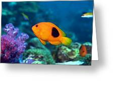 Red Saddleback Anemonefish And Soft Coral Greeting Card
