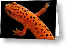Red Salamander Greeting Card