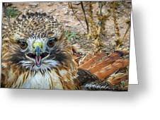 Red-tailed Hawk -5 Greeting Card