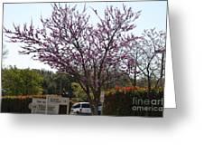 Redbud Tree  Greeting Card