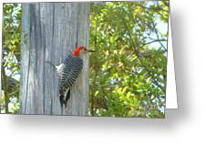 Redheaded Woodpecker Greeting Card by Marie Bulger