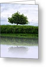 Reflecting Tree Greeting Card