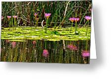 Reflective Wild Water Lilies Greeting Card