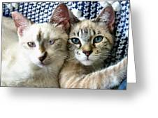 Rescued And Spoiled Greeting Card