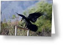 Resident Raven Greeting Card