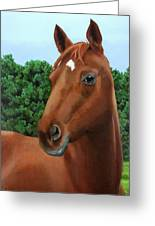 Retired Racer Greeting Card by Sandra Chase