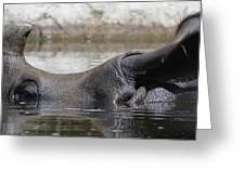 Rhino Greeting Card