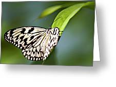 Rice Paper Butterfly 5 Greeting Card