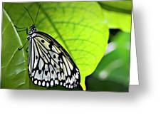 Rice Paper Butterfly 6 Greeting Card