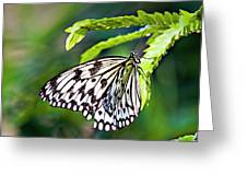 Rice Paper Butterfly 7 Greeting Card
