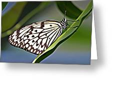 Rice Paper Butterfly 8 Greeting Card