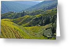 Rice Terraces In Guilin, China  Greeting Card