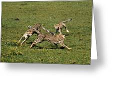 Ring Around The Cheetahs Greeting Card