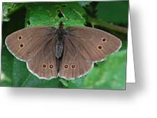 Ringlet Butterfly Greeting Card