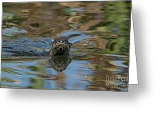 River Otter Greeting Card