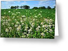 Roadside Wildflowers In Mchenry County Greeting Card