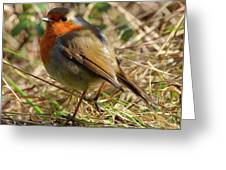 Robin In Hedgerow Greeting Card