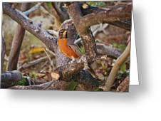 Robin On Cut Down Tree Branch Greeting Card