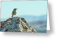 Rock Wren 2 Greeting Card