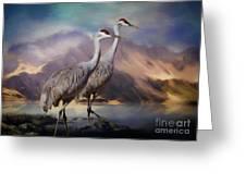 Rocky Mountain Sandhill Cranes Greeting Card