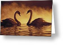 Romantic African Swans Greeting Card