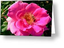 Rose Bee Greeting Card