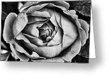 Rose Closeup In Monochrome Greeting Card