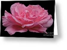 Rose - Flower Greeting Card