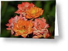 Pink And Orange Roses Greeting Card