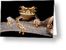 Ross Allens Treefrog Greeting Card