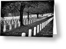 Rows Of Honor Greeting Card