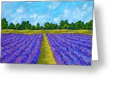 Rows Of Lavender In Provence Greeting Card