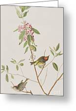 Ruby Crowned Wren Greeting Card