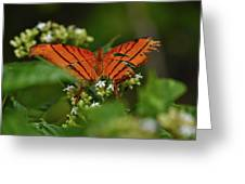 Ruddy Daggerwing Butterfly Greeting Card