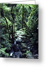 Rushing Stream El Yunque National Forest Greeting Card