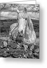 Rustic Horse  Greeting Card