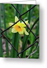1 Sad Daffy Behind Bars Greeting Card